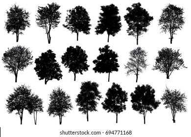 Collection Of Silhouette Of tree Isolated On White Background