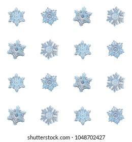 Collection of snowflakes isolated on white background. Macro photo of real snow crystals: large stellar dendrites with complex, ornate shapes, fine hexagonal symmetry, long, elegant arms and glossy su