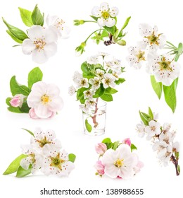 Collection of spring flowers of fruit trees isolated on white background