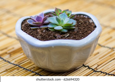 collection of succulent plants in pots on wooden plank