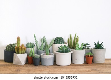 Collection of succulents plant in pot on table. Cactus lover