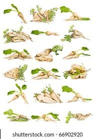 collection of sugar beet