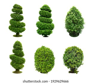 Collection of Tree decorations, garden. Characteristics of bending to turn into a spiral and oval sphere. Isolated on white background and clipping path.