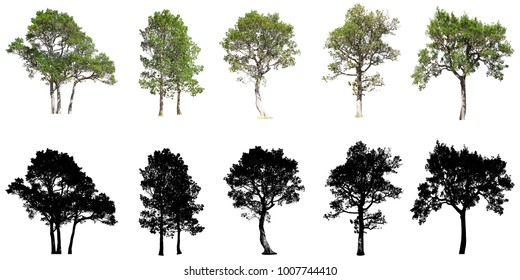 Collection of tree isolated on white background,Isolated of tree collection on white background