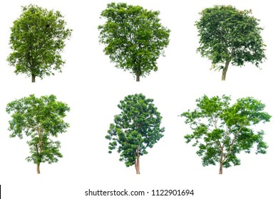 The collection of trees isolated on white background