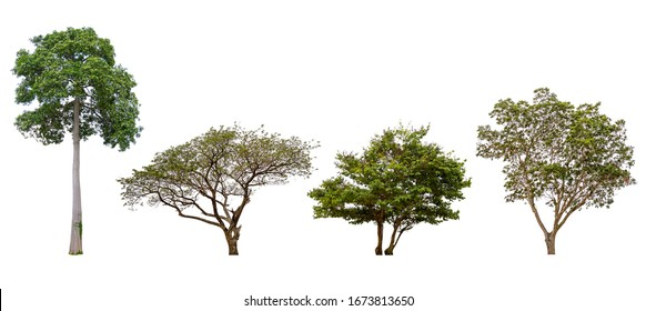 The collection of trees. Isolated trees on white background. with clipping paths.
