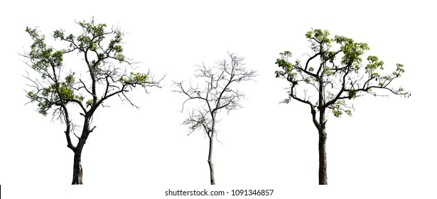 Collection of trees in summer time. Isolated trees on white background. Can used for environment concepts.