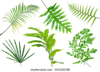 Collection of Tropical Leaves Isolated on White Background with Clipping Path