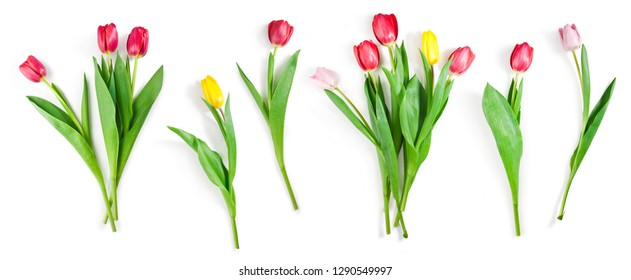 collection of tulip flowers isolated on white background with clipping path included