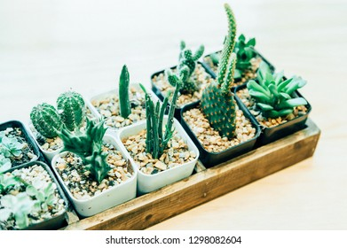Collection of various cactus in different pots. Potted cactus house plants on  white background.succulent plants