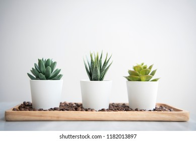 Collection of various cactus in pot on table.