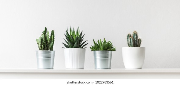 Collection of various cactus and succulent plants in different pots. Potted cactus house plants on white shelf against white wall. - Shutterstock ID 1022983561