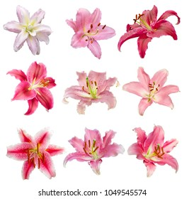 collection of various color Lilly flowers contain pink Lily flower isolated on white background with paths