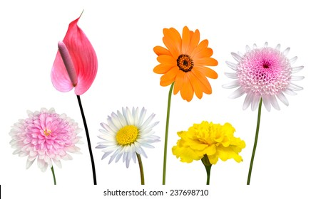 Collection of Various Colorful Flowers and Wildflowers with Green Stick Isolated on White Background. Vibrant Red, Blue, Pink, Purple, Yellow White, and Orange Colors. Bunch of wildflowers