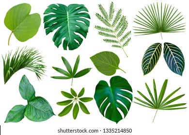 collection various of green leaves pattern for nature concept,set of tropical leaf isolated on white background