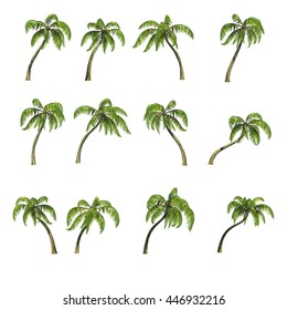 Collection various palm trees isolated on white background, 3D rendering, clipping path included