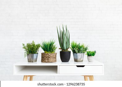 Collection of various plants in different pots on table against white brick wall