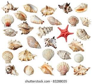 collection of  various seashells on  white background. each one is shot separately