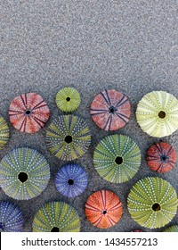 collection of vibrant colored sea urchin shells on sandy beach, space for text