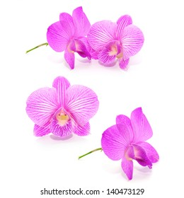 Collection Violet orchid isolated on white background