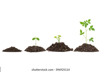 collection of Young green plant on  the soil ,on white background.