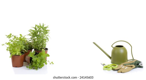 Collection of young herb plants with a watering can and gloves