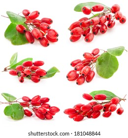 Collections of Barberry with leaves isolated on white background