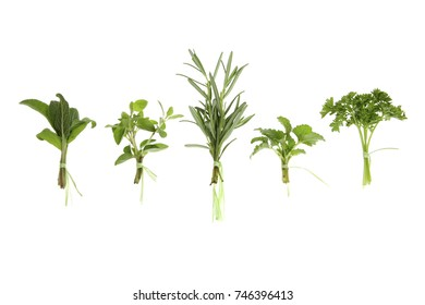 Collections of Isolated on white Herbs in a cute little Bunch - Sage, Oregano, rosemary, lemon balm / Melissa and Parlsley
