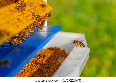 Collector of pollen on a hive. Bees with collected pollen enter the openings of Apiary pollen collector mounted on the hive. Pollen trap. harvesting in the apiary.
