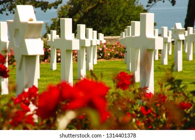 COLLEVILLE-SUR-MER, FRANCE - July 2, 2015: American war cemetery at Omaha Beach. Roses flowers in front and crosses in background.