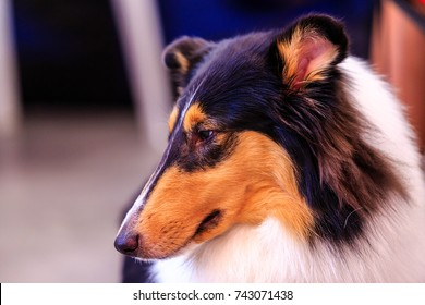 Collie is an extremely intelligent, sensitive dog who is known for her uncanny ability to know when something is wrong.