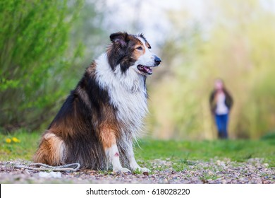 Collie-Mix dog sitting outdoors with a woman in the background
