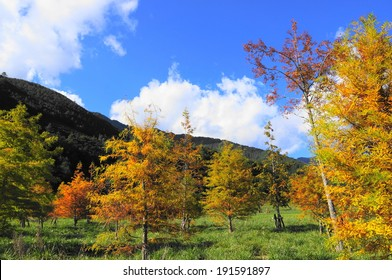 collorful woods in Wuling Farm, Taiwan during Autum