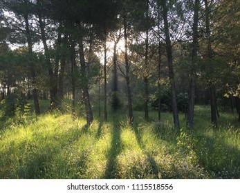 Collserola forest in the morning in Barcelona province in Catalonia Spain