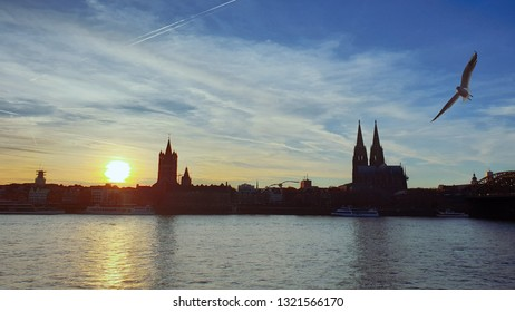 Cologne sunset city skyline with Cologne Cathedral (Kölner Dom) and Rhine River with Seagulls, Cologne, Germany