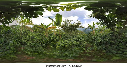 Colombia Coffee Plants