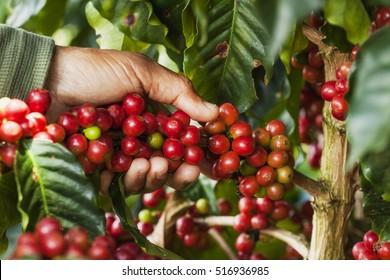 colombian coffe