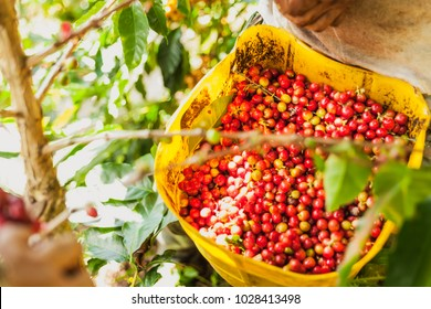 Colombian coffee images.