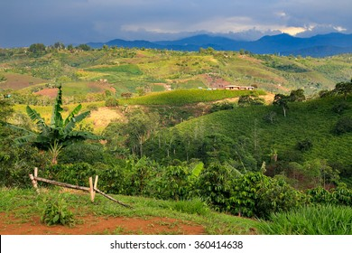colombian landscapes. green mountains in colombia, latin america, palms and coffee treesin colombia