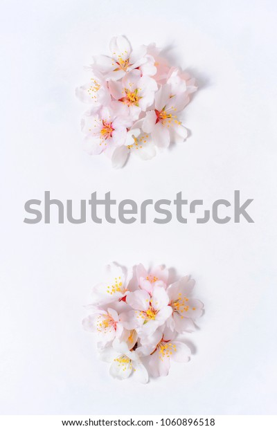 Colon lined with pink flowers on a white background
