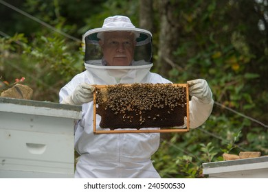 A colony of bees are swarming in a hive while the bee keeper cares for the bees.