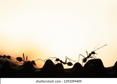 A colony of Green Ants having a conversation in a vine, abstract transparent of shape of ants at dusk, blur sunset background. Silhouette, selective focus. Leadership concept.