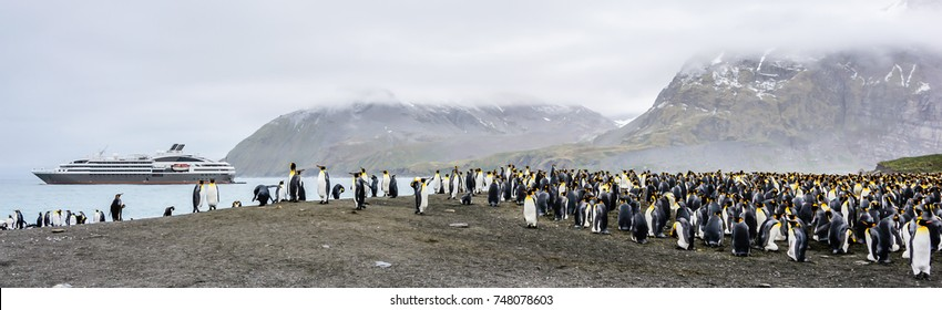 Colony of king penguins in front of an Antarctic expedition cruise ship, misty morning, South Georgia, wide format
