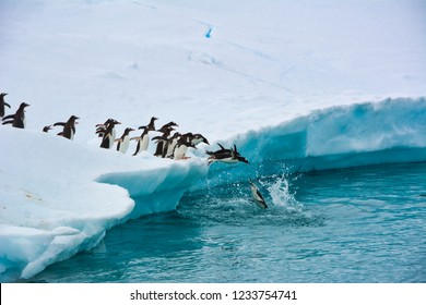 Colony of Penguins in Antarctica One After Another Jump Into the Blue Water – Stock Photo