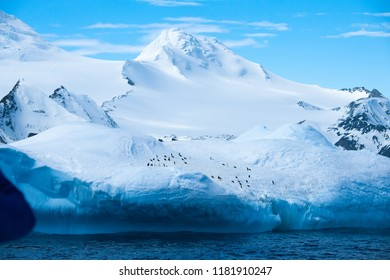 Colony of penguins in the snow capped mountain in Antarctica