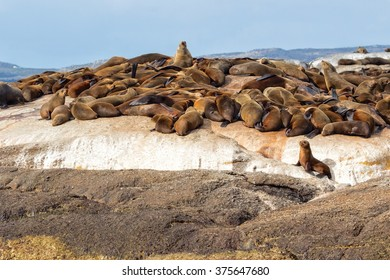a colony of seals at duiker island
