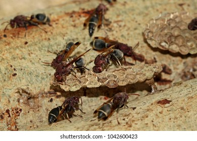 A colony of wasps builds a nest and Spawn