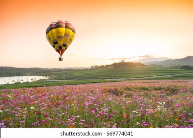 color air balloon over on Beautiful Cosmos Flower in park