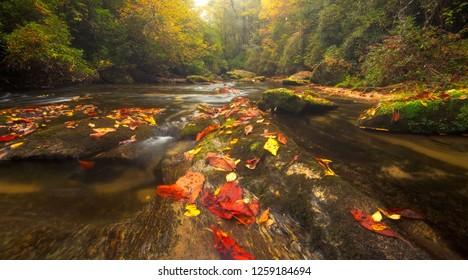 Color Autumn River in Appalachian Mountans of North Carolina