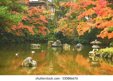 Color of autumn season in dusky day morning. Colorful autumn leaves in the Japanese style garden.